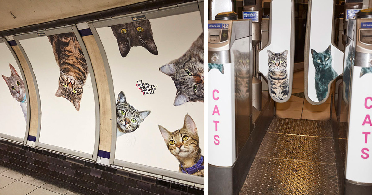 Photos of Citizens' Advertising Takeover Service (CATS) cat ads in London Tube station